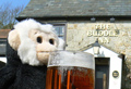 Monty Mooch monkey has a drink at the Buddle Inn, Niton, Isle of Wight.